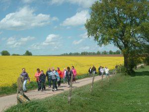 Sortie randonnée mardi 15 mai à Auzouville l'Esneval