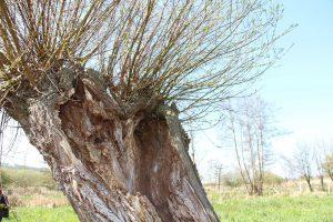 """Sortie nature """"apprendre à reconnaître les arbres"""""""