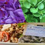huitres-cresson-quinoa-safran-ces-super-aliments-qui-ont-tout-bons